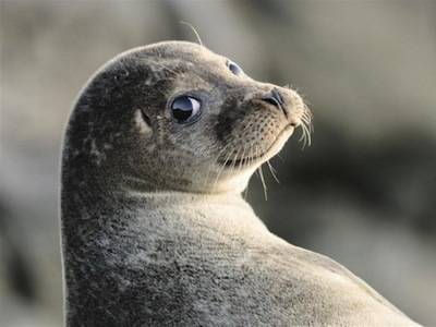 關心我們的地球!2012 英國野生生態攝影開獎,看動物的精彩生活