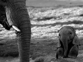 超可愛!世界超迷你的動物寶寶大全集
