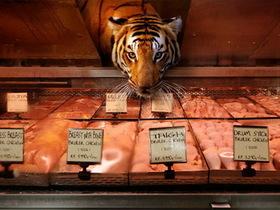 野生動物逛生鮮超市,美味直送新鮮上桌