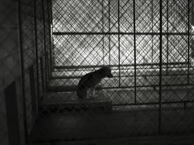 照片的震撼力量!動物收容所不敢告訴你的真相…