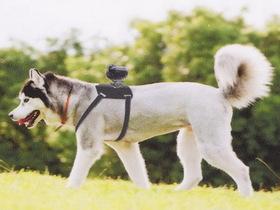 Sony 推出 AKA-DM1 犬用相機固定架,讓愛犬變身攝影師