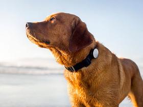 狗狗也有穿戴式裝置:Whistle 幫你監測愛犬的健康