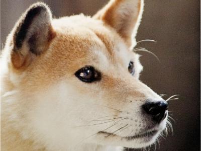 狂犬病應正名為「拉皮斯病」,不要再讓無辜的狗兒受害!