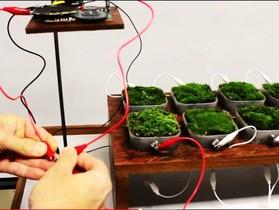 植物發電!利用苔蘚發電來驅動的收音機 Moss FM