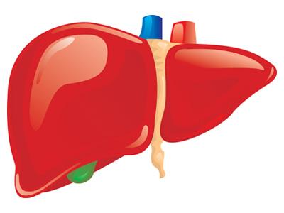 肝臟的認識與迷思,愛肝就從現在開始