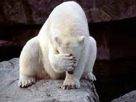 救救北極熊吧~