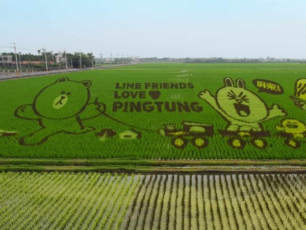 本周末開始,到屏東看 LINE 熊大、兔兔彩稻田