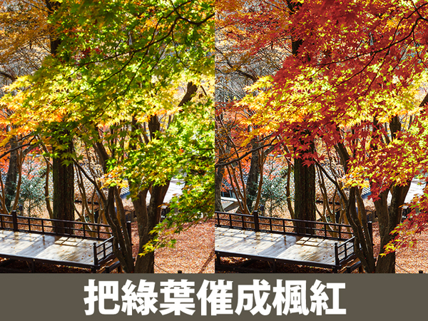 【攝影人的PS修圖技】把綠葉催成楓紅