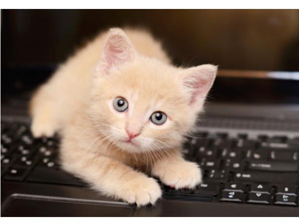 喵星人老是窩在鍵盤上?為鍵盤加裝喵星人防護罩
