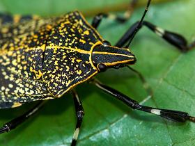 用相機抓蟲:準備篇(一)蟲蟲知多少