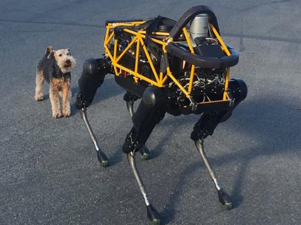 當真狗遇到機器大狗,到底誰會先退讓?