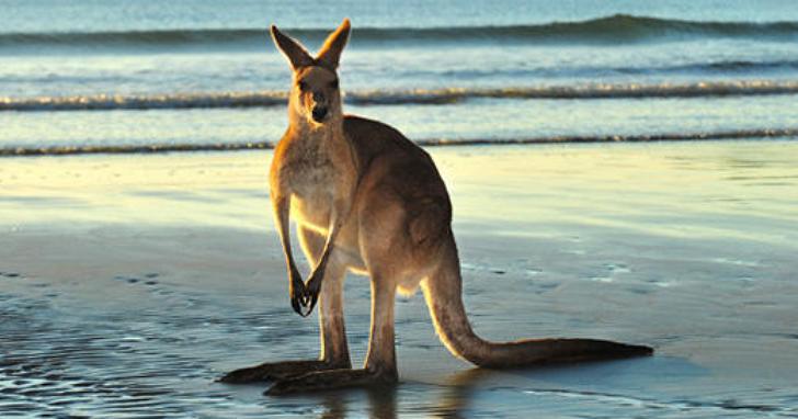 澳洲漂走中,GPS 定位快要追不上