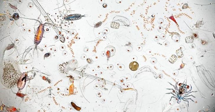 將海水用顯微鏡放大後拍下畫面,微生物動物園比你想像的還精彩