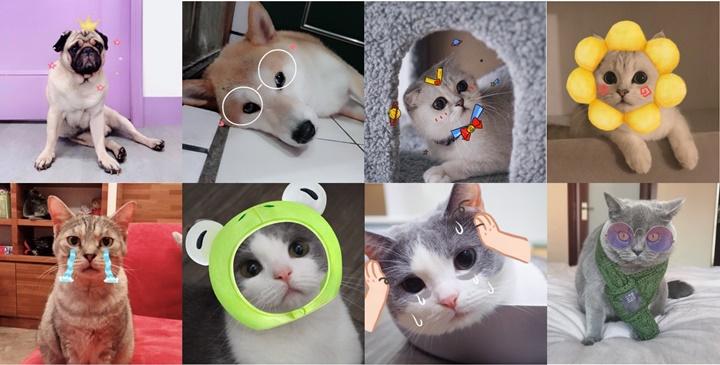 犬喵也要賣萌搞怪搏版面?美顏相機App 推出寵物專屬「萌寵AR」