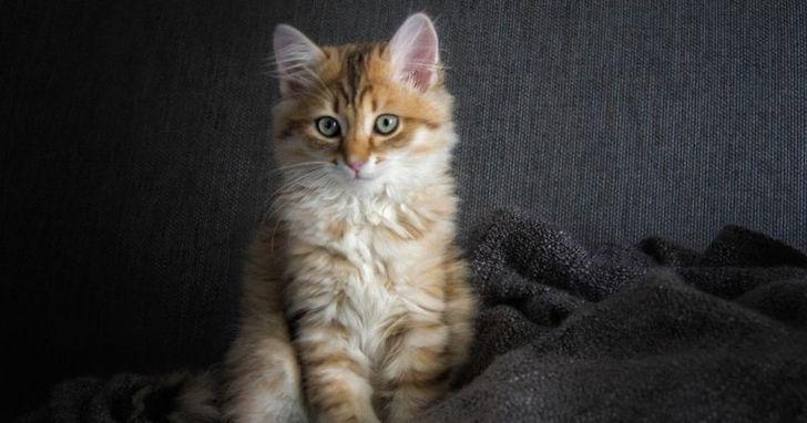 暖男工程師為流浪貓打造智慧庇護所