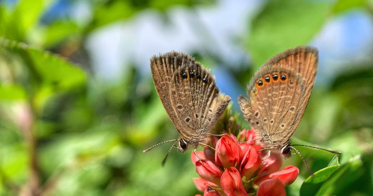 世界地球日!Apple 找來生態攝影師用 iPhone XS Max 捕捉蝴蝶之美