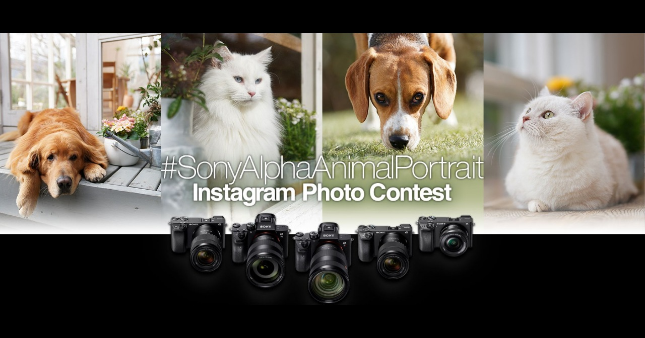 2019 Sony α系列Instagram動物攝影比賽徵件中,首獎價值超過18萬台幣