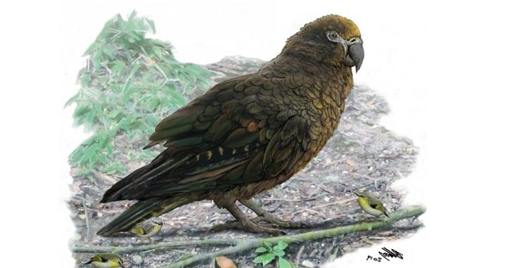 古生物學家在紐西蘭發現已滅絕巨型鸚鵡的遺骸,身高達一公尺