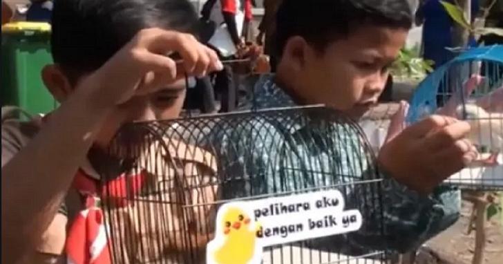 玩手機不如去養雞,印尼給學生發了2000隻小雞覺得能幫助不去沉迷網路