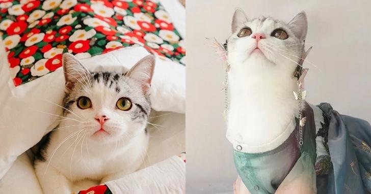 雙12搶萌寵商機,寵物床、寵物電熱毯銷量大漲