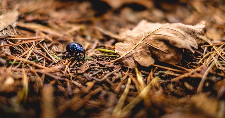 全球暖化不光光是人類害的,植食性昆蟲也脫不了關係