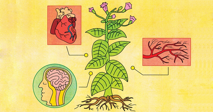 尼古丁是怎麼傷害你的大腦的?