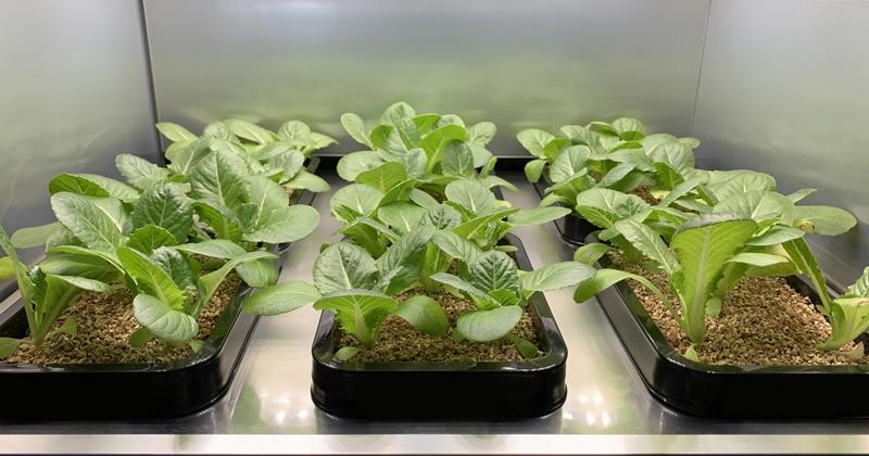 家裡的開心農場,LG 開發室內時蔬植栽器 CES 2020 展出