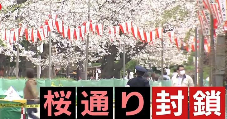 日本東京宣布封閉多處賞櫻區域,政府要求居家渡危機「明年櫻花還會開」