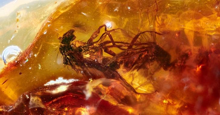4100萬年的激情,琥珀中發現遠古時期一對正交配的蒼蠅