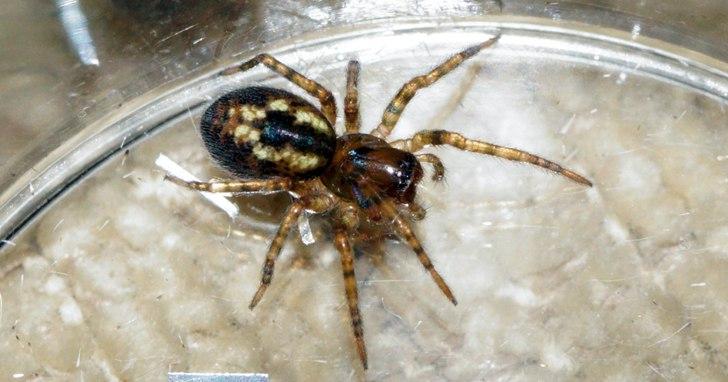 受蜘蛛啟發,科學家找到更好的奈米纖維新處理技術