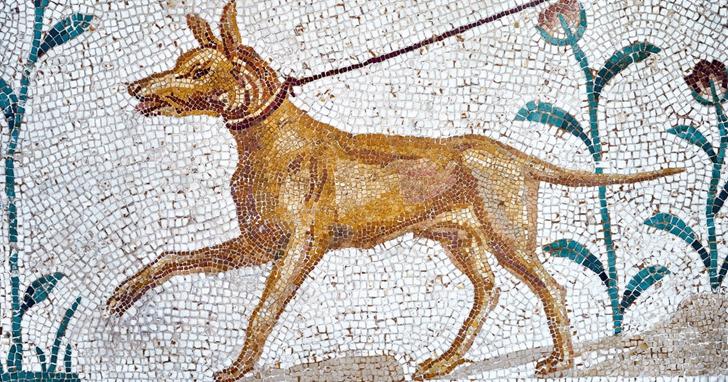 讓AI聞了聞「古大便」,結果發現考古記錄滿是狗糞味!