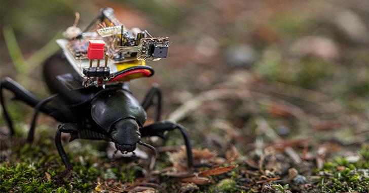 像是把GoPro裝在甲蟲身上!華盛頓大學研發出能用於昆蟲的微型攝影機