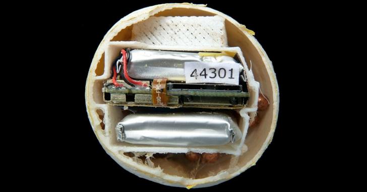 使用3D列印海龜蛋,裝置GPS追蹤了137公里的非法交易鏈