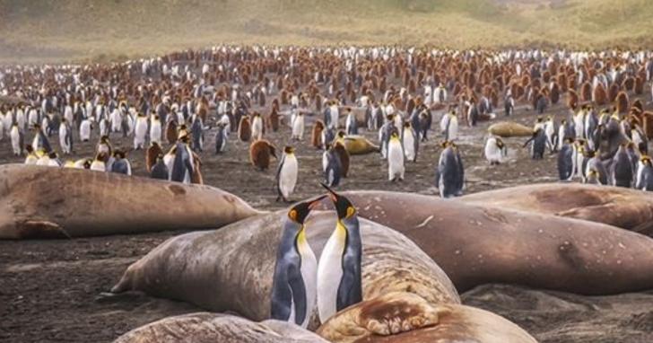世界最大的冰山直朝南喬治亞島而去,可能威脅海豹、企鵝等野生動物棲息