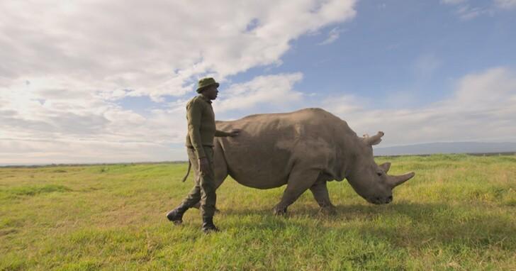 物種消失使人類陷入生存危機,BBC Earth《地球生態季》要告訴你《滅絕的真相》