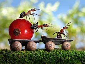 螞蟻活生生演出的驚奇照片,沒有 PS、攝影師如何做到?