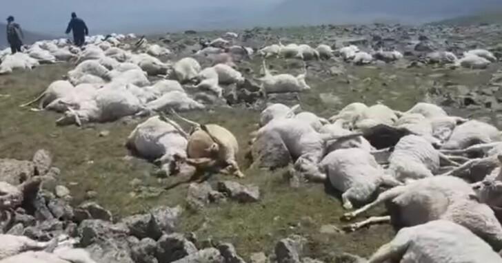喬治亞詭異事件,550隻羊吃草時被雷瞬間劈死、如薩諾斯發威