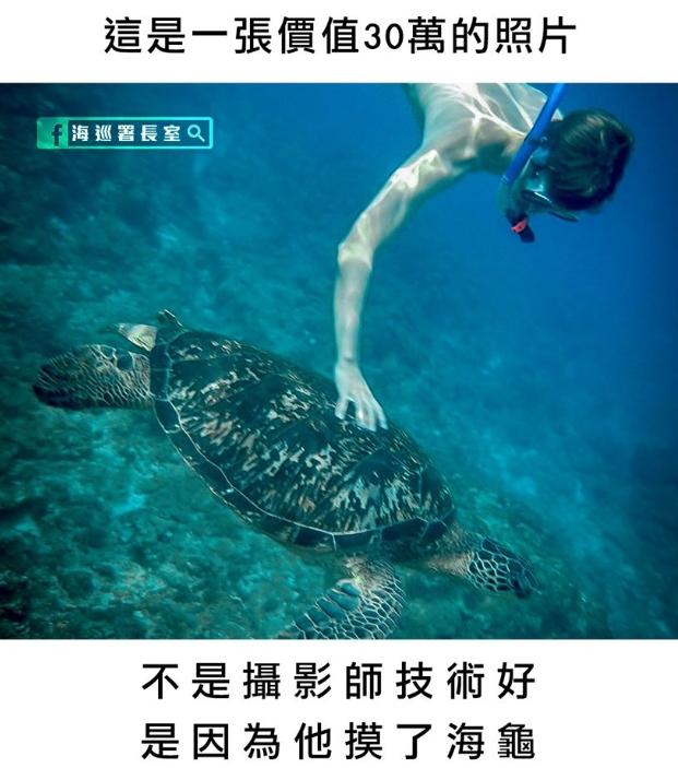 海巡署:這張照片價值30萬,因為他摸了海龜