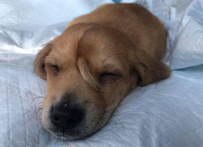 動物救援組織披露一隻「尾巴長在�上」的流浪狗,爆紅成為美國人最想認養的小狗