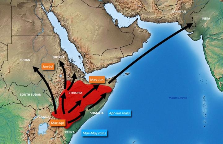 3月到6月蝗群遷飛預測。圖片來源:聯合國糧農組織